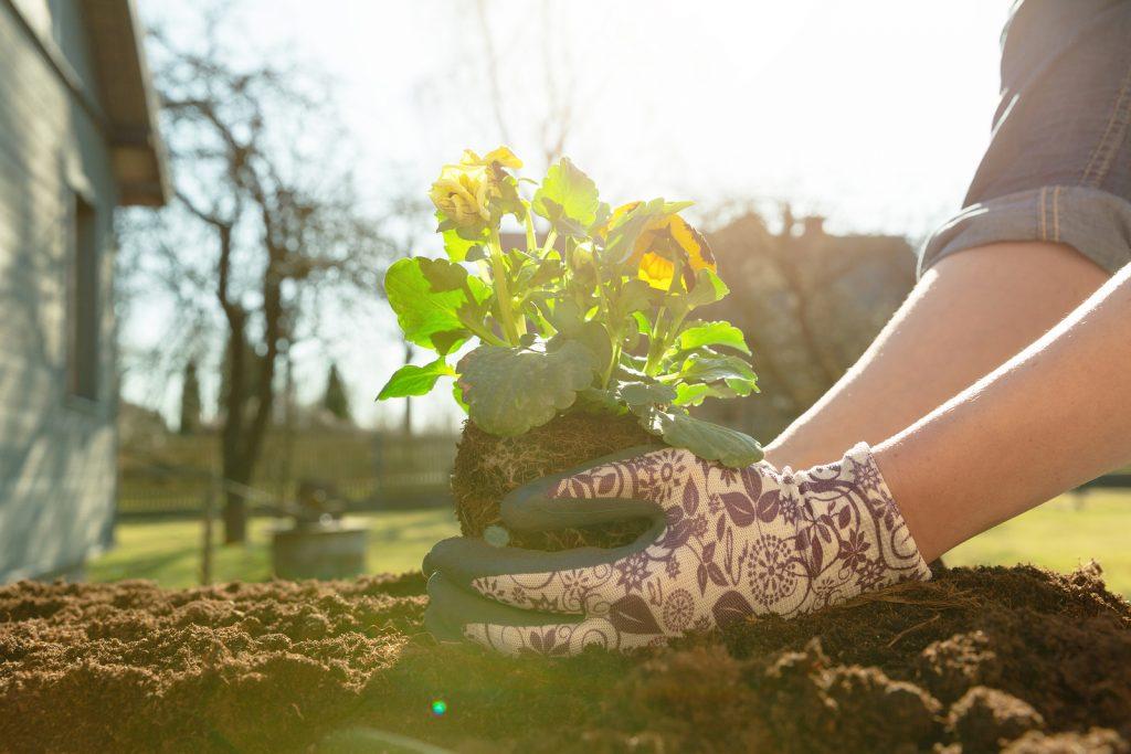 bigstock Gardener Woman Planting Flower 293946622